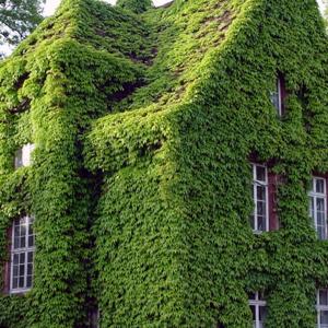 fasadenbegruenung